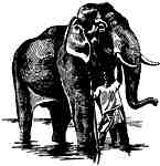 Elephant with Keeper