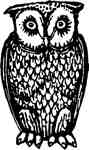 Owl Standing Sml