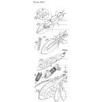 Planche Insects Inside