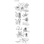 Planche Insects