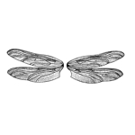 Dragonfly Wings Lg