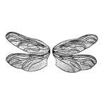 Chubby Dragonfly Wings