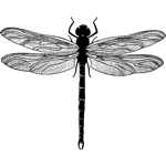 Dragonfly Bold Sml