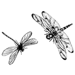 Mini dragonflies set