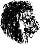 Lion profile drawing