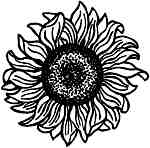 Sunflower head Lg