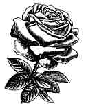 Rose engraving