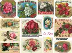 Rose Ephemera Collage Sheet