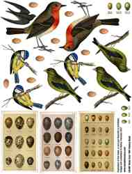 Birds 1891 History Book Collage Sheet